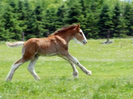 Foal running by PaulMcKinnon
