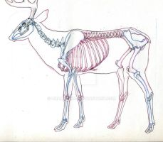 Deer Skeleton Study by UnamedKing