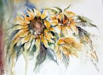 fascination of Sunflowers by janipabel