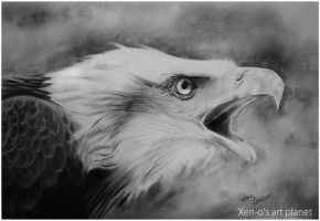 Bald Eagle by xenoHaider