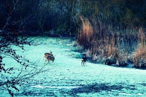 The deer hunter by tugalot