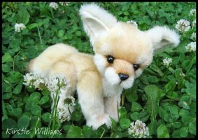 Fennec Fox Kit by deeed