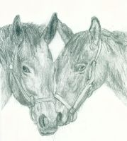 Horses Drawing by Outsider767