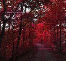 Red enchantment. by MauiMelle