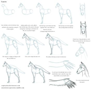Notes on a Pegasus by Expression