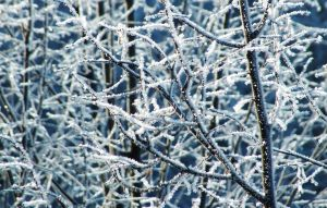 Frost Feathers_2 wallpaper by Shamakhanka