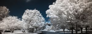 White Trees by Death-By-Romance