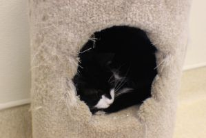 Pretty Kittie in a Hole by TabiKittie