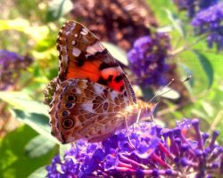 The welcoming sunbathing butterfly by Cloudwhisperer67