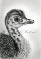 ostrich chick by Isisnofret