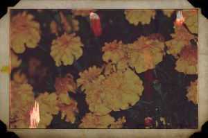my mother's scrapbook by fotomademoiselle