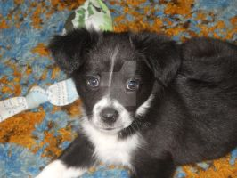 Cosette: 8 Weeks Old by Miss-Whoa-Back-Off