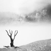 Lone Tree by Hengki24