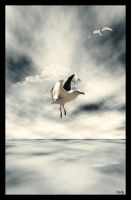 Fly by CindysArt