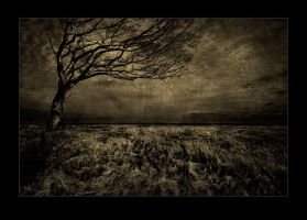 The Meadow by raun