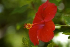 Red Flower by OverStocked