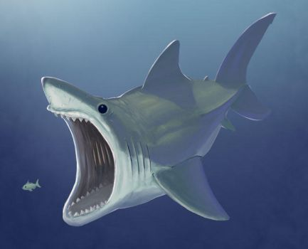 Great White 2012 by feeves