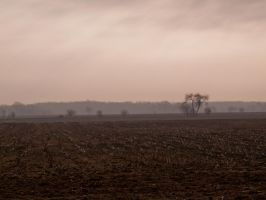 Foggy Landscape by PUBLIC-DOMAIN-PICS