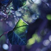 . ivy by ThisFairyTale