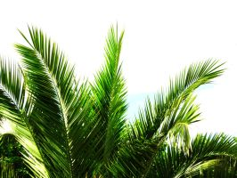 Palms 2 by LL-stock