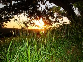 faires view of a sunset by Estruda