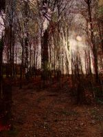 Forest Sun by Clangston