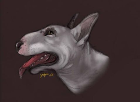 Bull terrier portrait by Boarfeathers