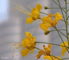 Yellow flowers by abdulhamid-alattar