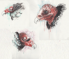 some more vultures by Zemie