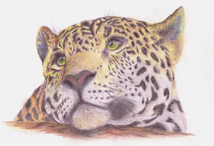 A Leopard ...Lion by Shinti