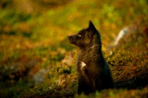 Baby Foxes - Moments Ago 9 by Witch-Dr-Tim