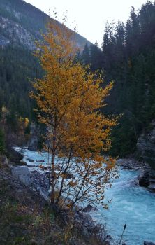 Yellow tree by lucium55