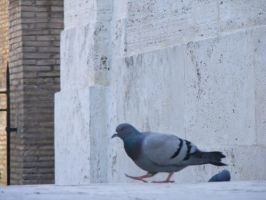 pigeon by ankhmyth