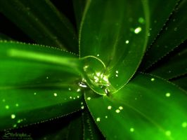 Green leaf by isfahangraphic