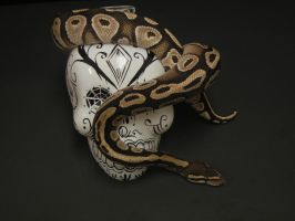 Ball Python 12 by FearBeforeValor