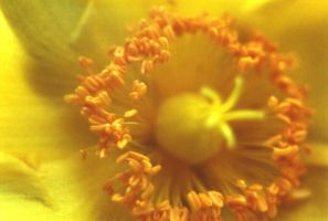 yellow macro by ia