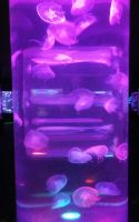 Jellyfish Lava Lamp by ShipperTrish