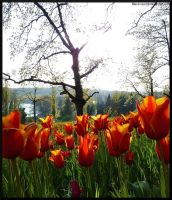 Mainau flowers IV by acoresjo88