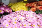 Fall Flowers in bloom by star-rose-three