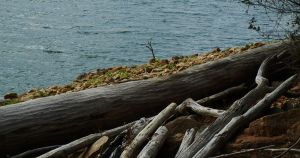 Driftwood by KDMB