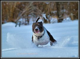 WINTER FUN- ZEUS by Kittihawk11