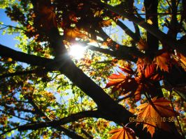 Light in the Leaves (2) by Introverses