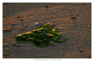 On the beach - 004 by laurentroy