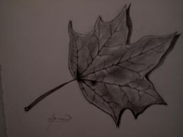 Maple leaf by eldon14