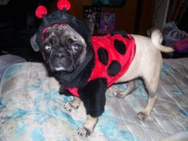 LadyPug by Nelby2388