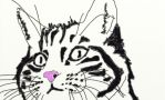 cat with pink nose by Ereane