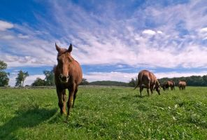 Horses of Sagamore by znkf0908