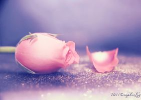 Pink Rose bokeh 2 by Sophie-Y