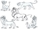 Lion King sketches in pen by Animator-who-Draws