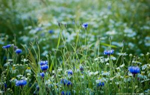 Meadow by pathar